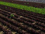 "Jornada: ""Ferramentes per la sostenibilitat agroecològica i economia circular"""